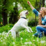 Come imparare a educare un cane?