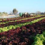 Aprire una cooperativa agricola: Ecco tutto quello che c'è da sapere