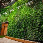 Come creare dei giardini verticali indoor