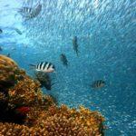 I luoghi migliori del mondo dove fare immersione