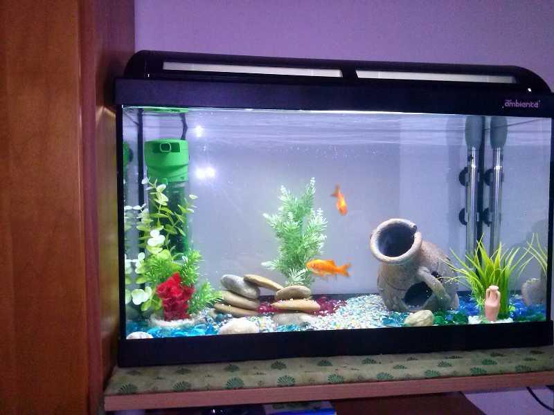 foto acquario con pesci