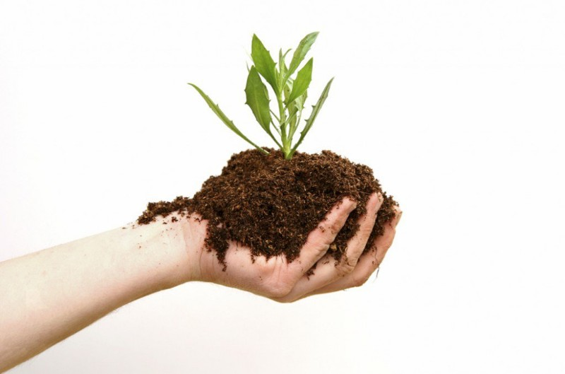 Haciendo-Fertilizantes-Organicos-1024x677_800x529