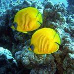Le immersioni più belle da fare in Egitto