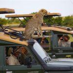 Tanzania e Zanzibar: Safari e spiagge