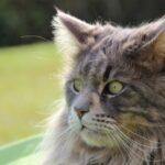 Pelo del gatto bello, quali sono gli alimenti indispensabili?